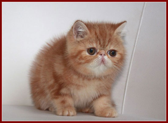 My new little girl kitty