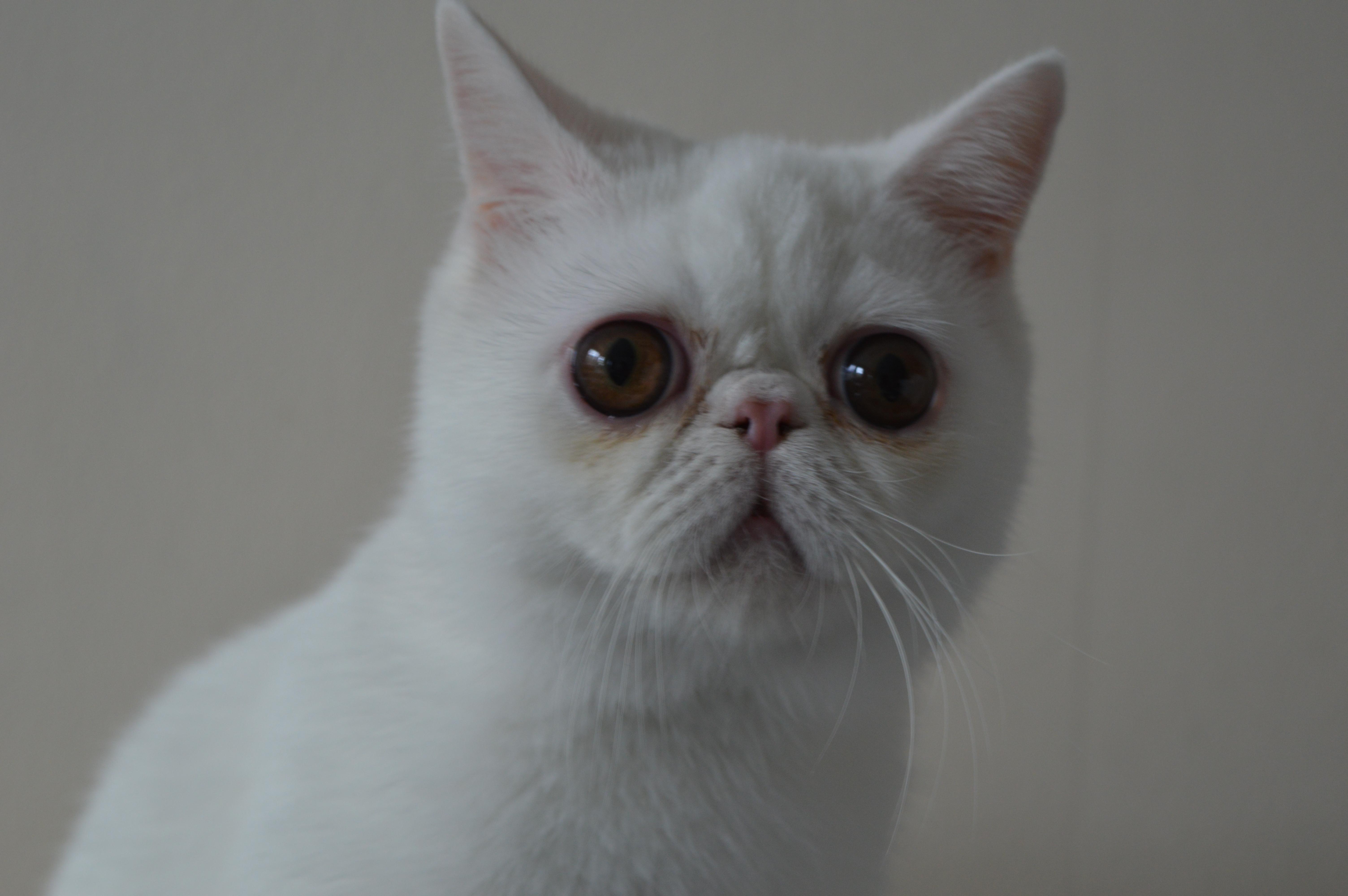 cat 226b specs